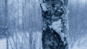 Las w opadzie śniegu zdjęcie wideo