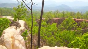 Las w Pai jarze, Tajlandia zdjęcie wideo