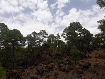 Las w parku narodowym Tenerife Zdjęcia Royalty Free