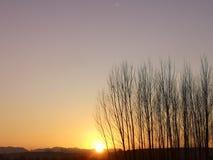 Las w ranku W zimie gdy Swój sunrising czas zdjęcie royalty free