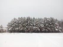 Las w Rosja Zdjęcia Stock