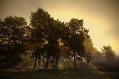 Las w słońcu Fotografia Stock