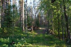 Las w słońcu zdjęcia stock
