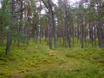 Las w spadku 55 Zdjęcie Stock