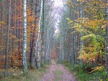 Las w spadku Fotografia Stock