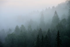 Las w Sugulda Obrazy Stock