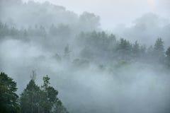 Las w Sugulda zakrywał Zdjęcia Stock