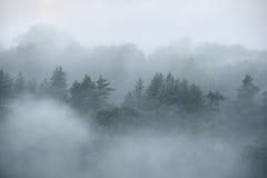 Las w Sugulda zakrywał Obrazy Royalty Free