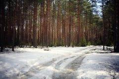 las w wczesnej zimie Obrazy Royalty Free