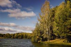 Las w wybrzeżu Fotografia Stock