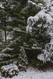 Las w zima Zdjęcia Stock
