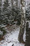 Las w zima Fotografia Royalty Free