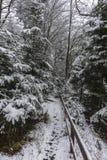 Las w zima Zdjęcie Stock