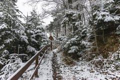 Las w zima Fotografia Stock