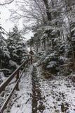 Las w zima Obraz Royalty Free