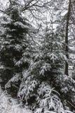 Las w zima Zdjęcia Royalty Free