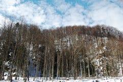 Las w zima Zdjęcie Royalty Free