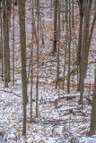 Las w zima czasie fotografia stock