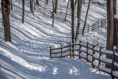 Las w zima czasie obraz royalty free