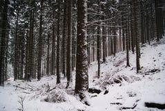 Las w zima dniu Zdjęcia Stock