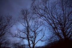 Las w zimie zdjęcie stock