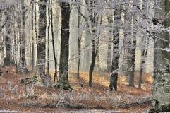 Las w zimie Zdjęcia Royalty Free