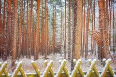 Las w zimie Zdjęcia Stock