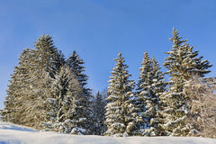 Las w zimie Obraz Stock