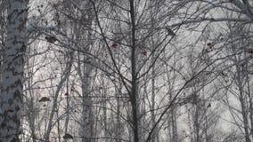 Las w zimie Mnóstwo śnieg W pierwszoplanowych drzewach bez ulistnienia w śniegu Las w zimie Mnóstwo śnieg W foreg zbiory