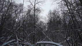 Las w zimie Mnóstwo śnieg W pierwszoplanowych drzewach bez ulistnienia w śniegu zbiory