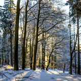 Las w zimie na słonecznym dniu Zdjęcia Stock