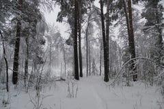 Las w zimie z śniegiem Fotografia Royalty Free