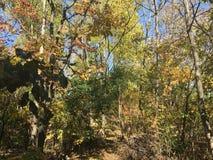 Las, wcześni jesieni drzewa Zdjęcia Stock