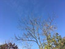 Las, wczesna jesień W górę widoku na drzewach Obraz Stock