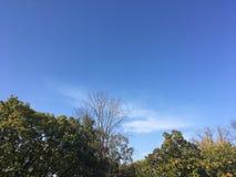 Las, wczesna jesień W górę widoku na drzewach Fotografia Royalty Free
