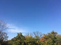 Las, wczesna jesień W górę widoku na drzewach Zdjęcia Stock