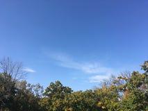Las, wczesna jesień W górę widoku na drzewach Zdjęcia Royalty Free