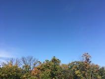 Las, wczesna jesień W górę widoku na drzewach Obrazy Stock