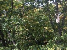 Las, wczesna jesień Drzewa Obrazy Stock