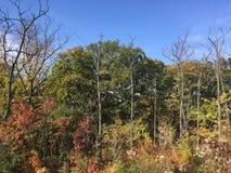 Las, wczesna jesień Drzewa, niebieskie niebo Fotografia Stock