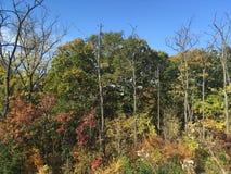 Las, wczesna jesień Drzewa, niebieskie niebo Obraz Royalty Free