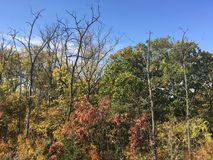 Las, wczesna jesień Drzewa, niebieskie niebo Obrazy Royalty Free