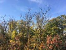 Las, wczesna jesień Drzewa, niebieskie niebo Zdjęcie Royalty Free