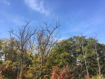 Las, wczesna jesień Drzewa, niebieskie niebo Zdjęcia Stock