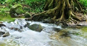 Las wody strumień, Tropikalny tropikalny las deszczowy w Tajlandia Zdjęcia Stock