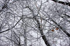 las wykłada śnieg wiele Obrazy Stock