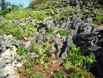 Las wypełniający z wielkimi skałami Zdjęcie Royalty Free