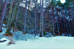 las z śniegiem obrazy royalty free