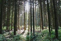 Las z światłem słonecznym Zdjęcie Royalty Free