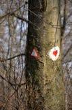 Las z drzewami i czerwony serce malowaliśmy na drzewie zdjęcie stock